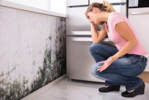 The Hard Truth of Mold Remediation that No One Wants to Talk About