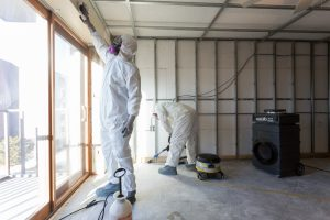 A Behind-the-Scenes Look at How Mold Remediation Works