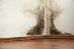 Mistakes that CAUSE mold