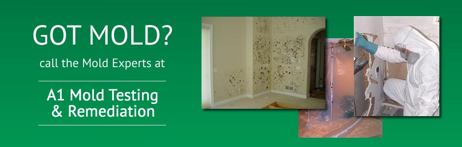 Got Mold? Call The Mold Experts at A1 Mold Testing and Remediation